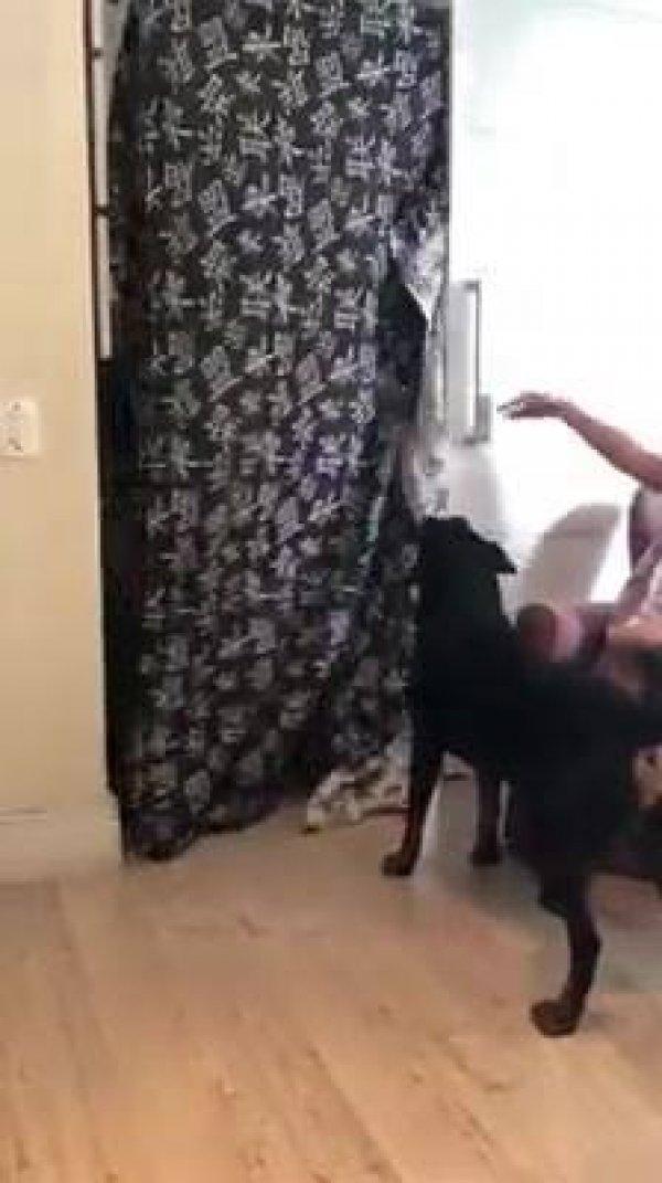 Foi fazer mágica para o cachorro e quebrou a televisão hahaha!