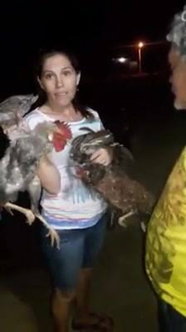 Mulher vendendo galinha por 25 reais, veja a proposta que ela negou hahaha!