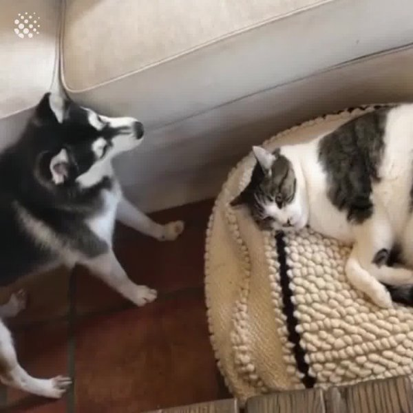 A amizade entre um cachorro e um gato, meio forçada, mas esta dando certo!