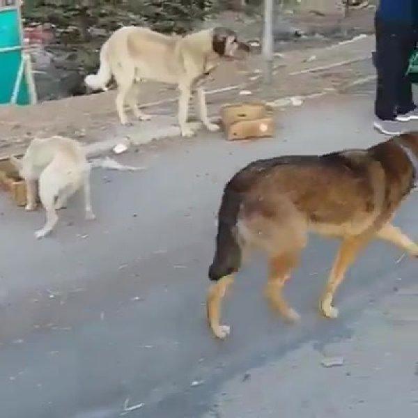 Alimentando os cachorros de rua, eles parecem terem ficado felizes!