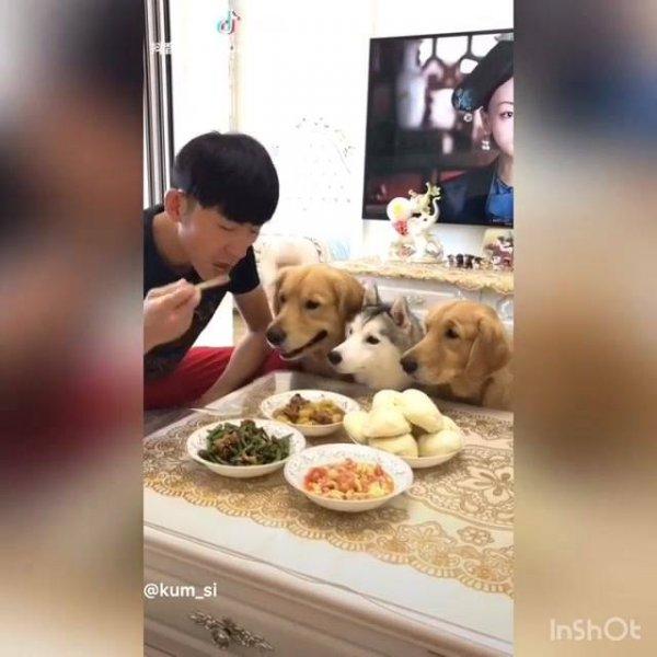Almoço com os cães, olha só como essa galerinha é rápida, hahaha!!!