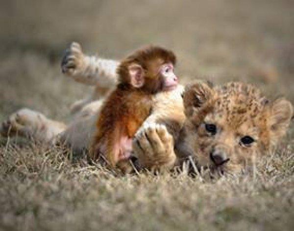 Amizade entre animais de diferentes especies, eles nos surpreendem sempre!!!
