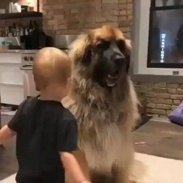 Amizade entre cachorro e criança - Uma amizade que vai além de tudo!