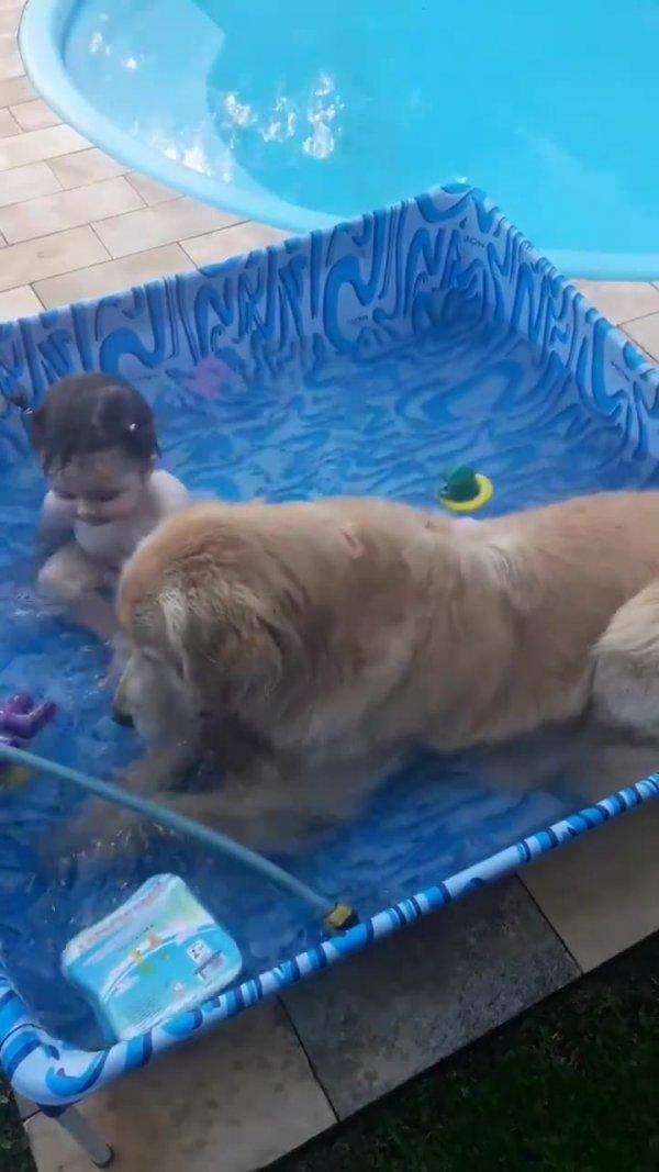 Amizade entre criança e cachorro, eles dividem até a piscina!