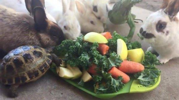 Animais comendo verduras e legumes todos juntos, como são educadinhos!!!