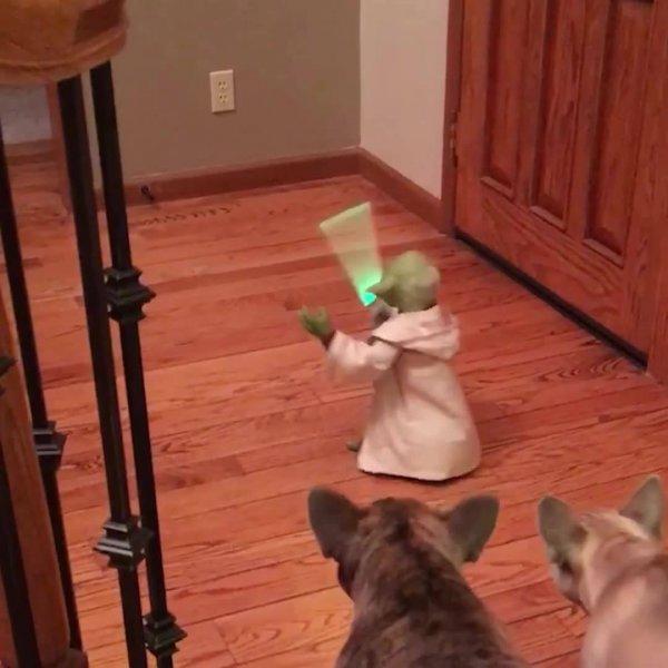 Animais de estimação e brinquedos, veja como eles reagem é muito engraçado!!!