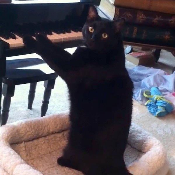 Animais de estimação e pianos, eles adoram o som deste instrumento!!!