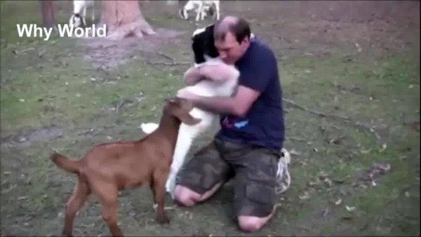 Animais demonstrando amor por humanos, que video emocionante!