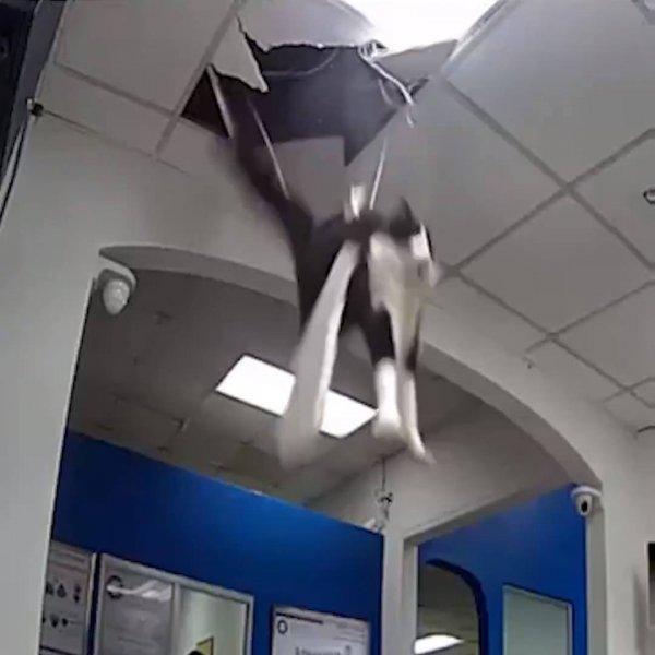 Animais flagrados fazendo as bagunças mais divertidas e atrapalhadas!