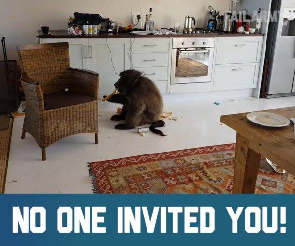 Animais mais exóticos pegos em flagrantes dentro de casa, confira!