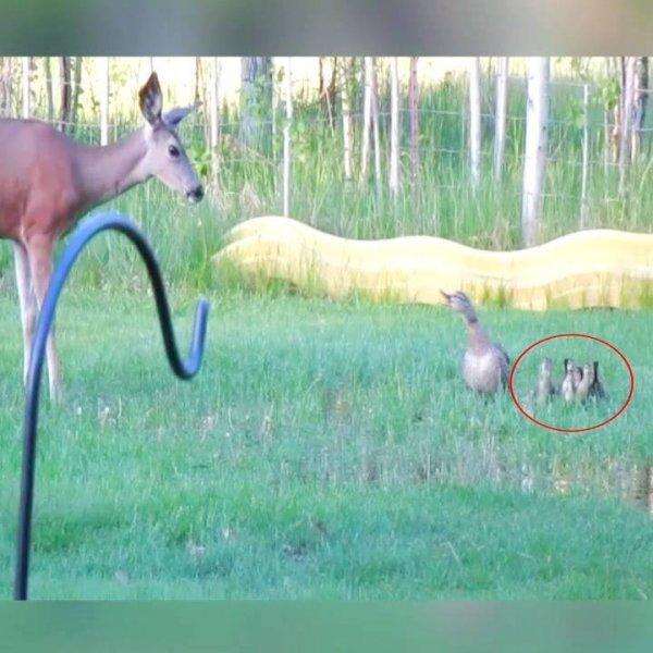 Animais protegendo outros animais, e até mesmo pessoas, confira!!!