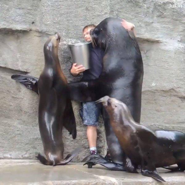Animais que foram salvos por humanos, agradecendo, é impressionante!!!