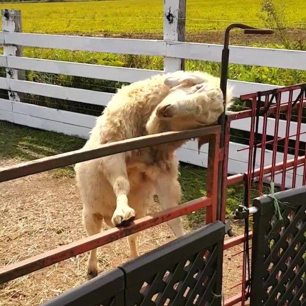 Animais se cocando, duvido você não sentir coceira em algum lugar de seu corpo!