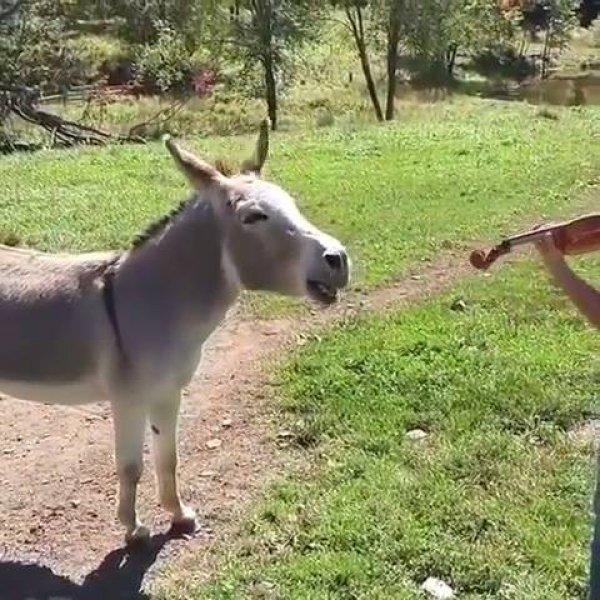 Animal cantor - Você não vai acreditar em tanto talento, confira!