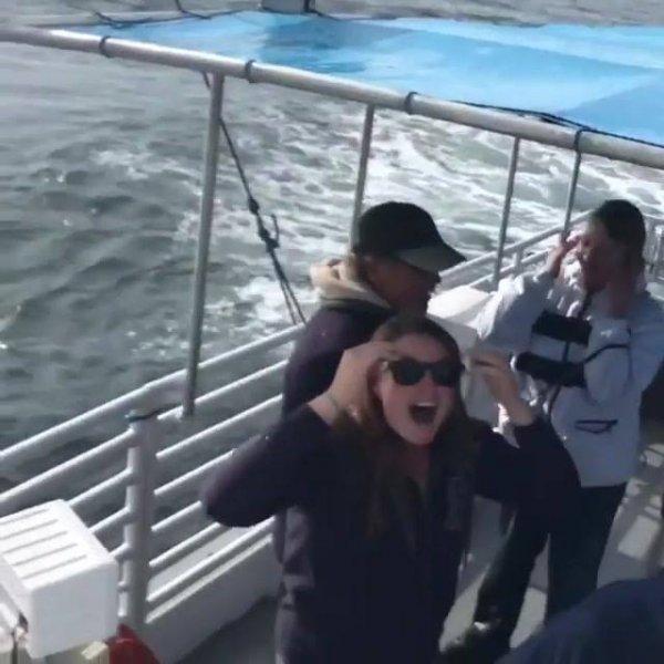Baleia aparece para surpreender os turistas, que coisa incrível!