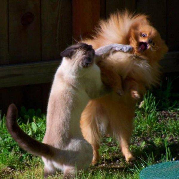 Brigas entre animais mais engraçadinhas que você já viu, confira!!!