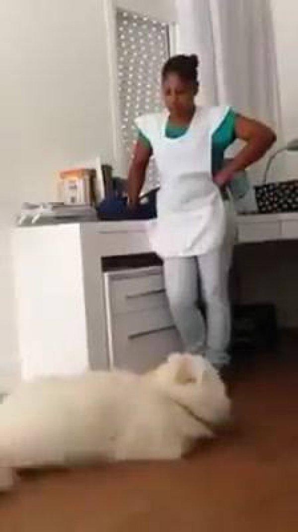 Cachorra dá abraço e beijo em mamãe que estava brava, confira!