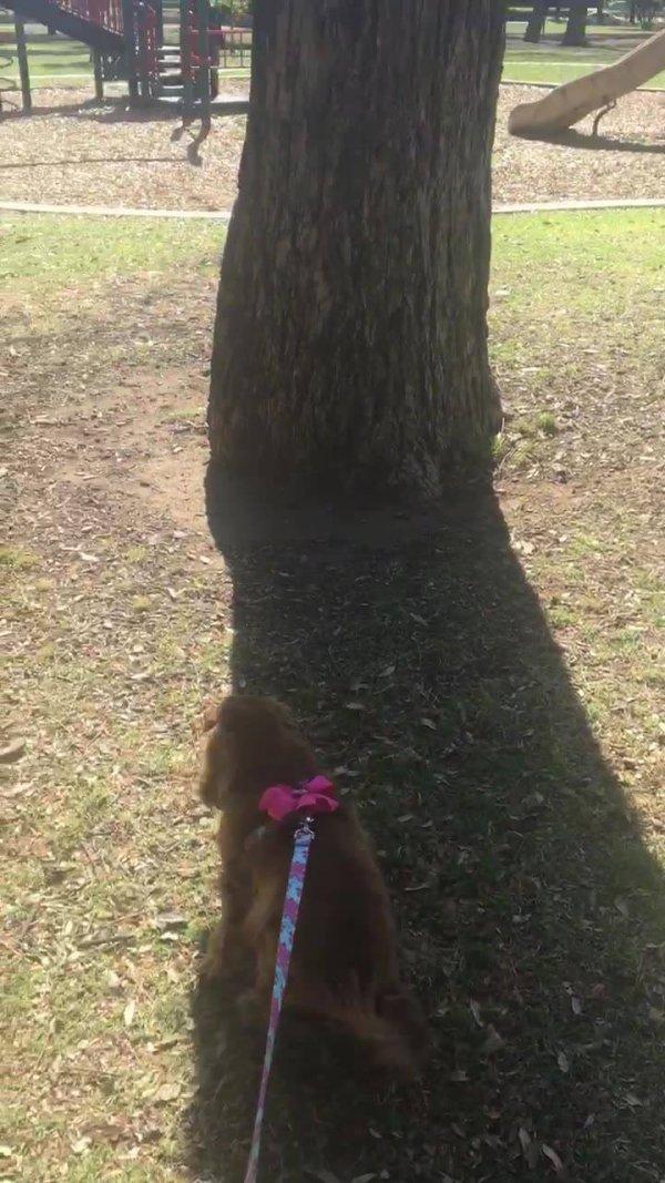 Cachorrinha intrigado com esquilosinho na arvore, ela ate chora!!!