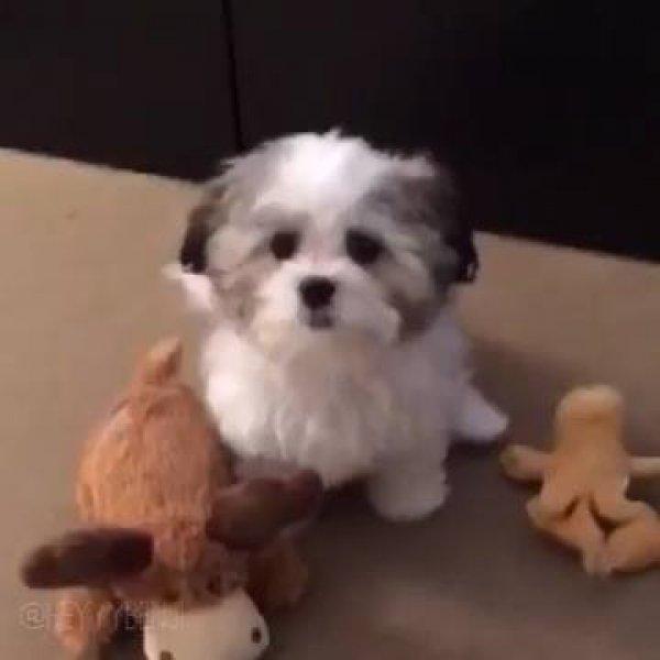Cachorrinho acha seu melhor amigo nos brinquedos, mas quando coloca uma pizza...