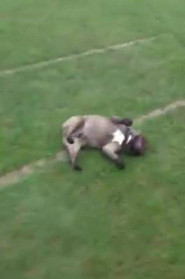 Cachorrinho brincando de escorregar no campo, olha só que engraçadinho!!!