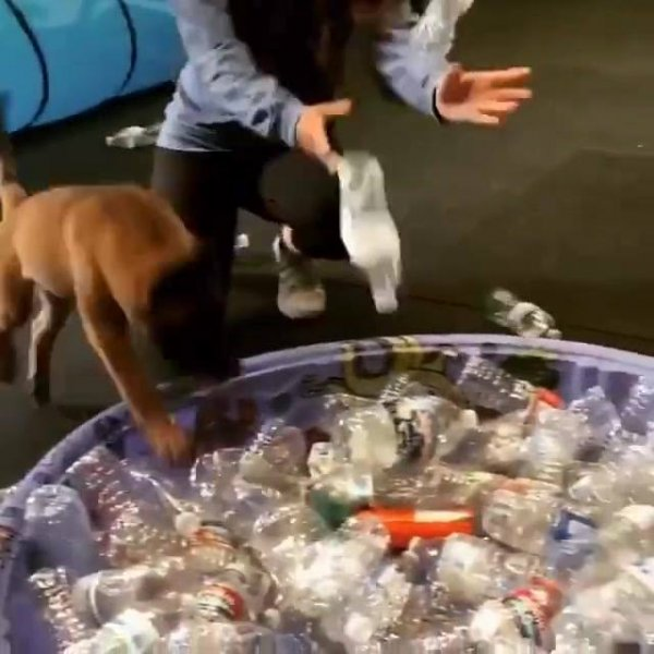 Cachorrinho brincando em piscininha com garrafas de plastico, veja a alegria!!!