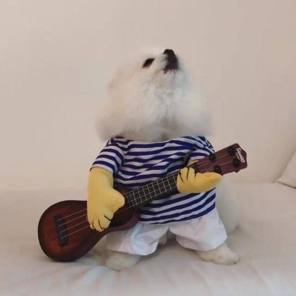 Cachorrinho cantor, esse ainda vai fazer muito sucesso hein!