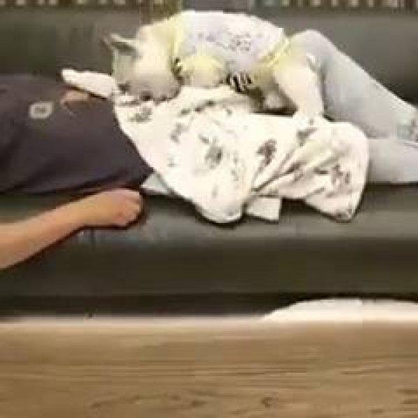 Cachorrinho cobrindo o papai humano que esta dormindo no sofá!