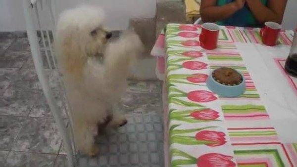 Cachorrinho comemorando seu aniversário, olha só que fofinho!!!