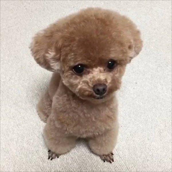 Cachorrinho de verdade que parece de mentira, muito fofinho!