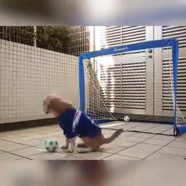 Cachorrinho é goleiro, ele não deixa nenhuma bola passar, confira!!!