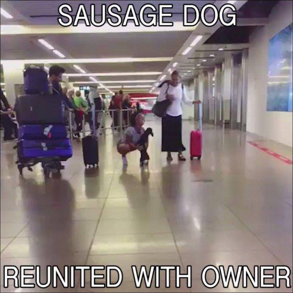 Cachorrinho matando a saudades dos donos no aeroporto, confira!