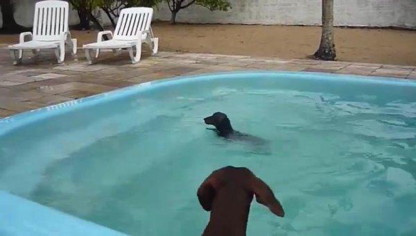 Cachorrinho nadando, olha só a carinha dele de felicidade!!!