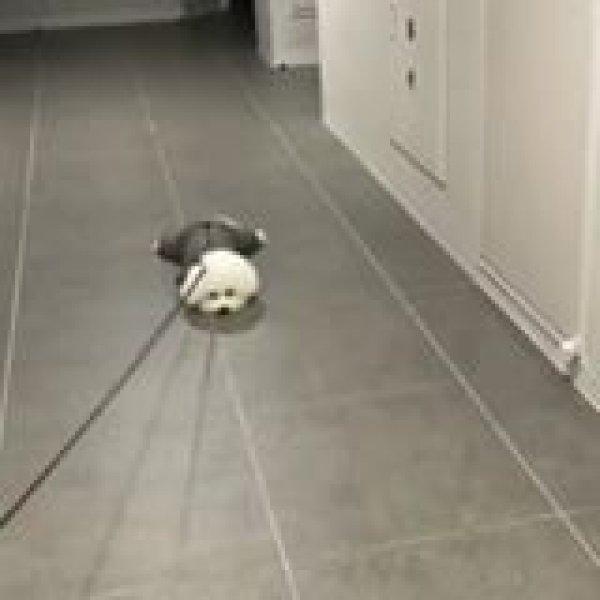 Cachorrinho não quer passear, olha só a preguiça deste amiguinho!!!