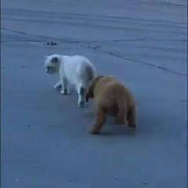 Cachorrinho quer brincar com gatinho mas ele não parece estar querendo!!!