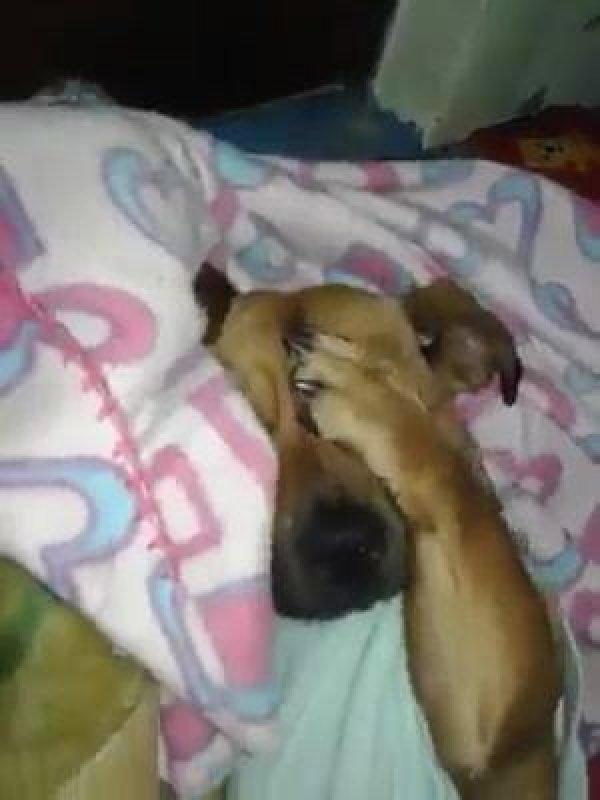 Cachorrinho resgatado da rua, o que o amor não faz para os animais!