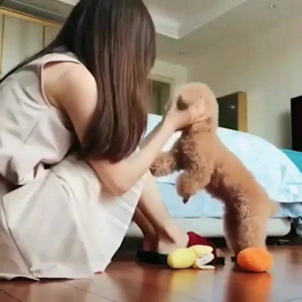 Cachorrinho tenta de todas as formas agradar sua humana que esta triste!