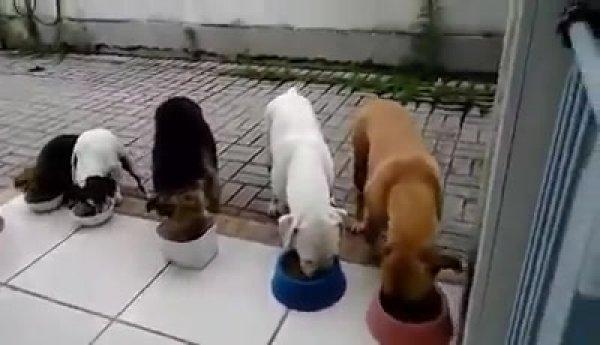 Cachorrinhos esperando oração para comer, olha só como são educados!!!