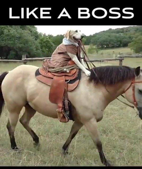 Cachorro andando à cavalo, ele parece gostar mesmo de fazer isso!
