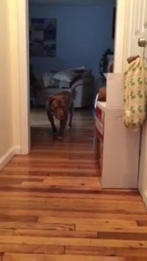 Cachorro andando devagarinho para não acordar o gato, olha só que engraçado!!!
