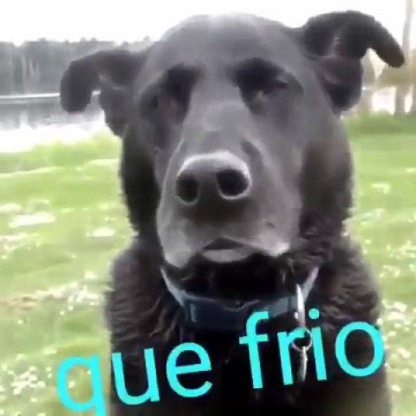 Cachorro batendo o dente de frio, alguém aquece o cão, por favor hahaha!