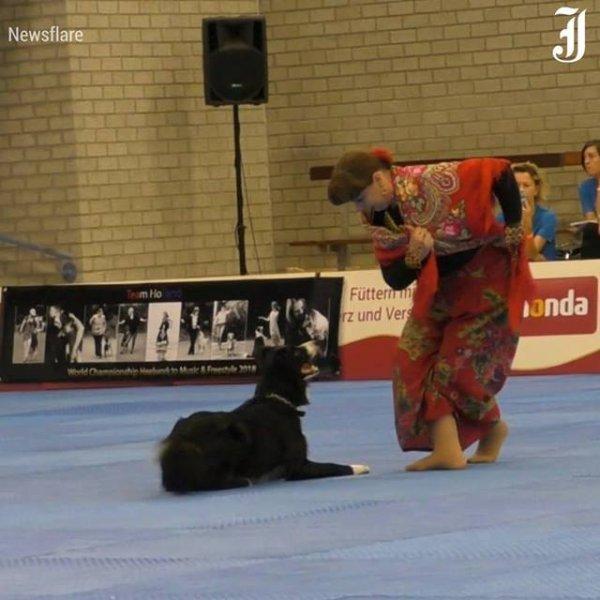 Cachorro Border Colie dançando com mulher, um video incrível!