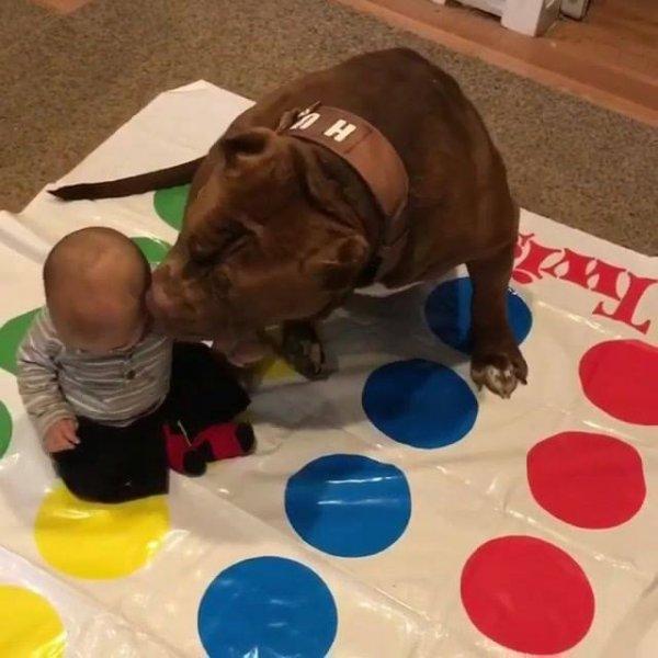 Cachorro brincando com bebê e jogo de chão, que dupla linda!