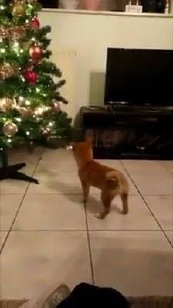 Cachorro brincando com bolinha da arvore de natal, olha só que fofura!!!