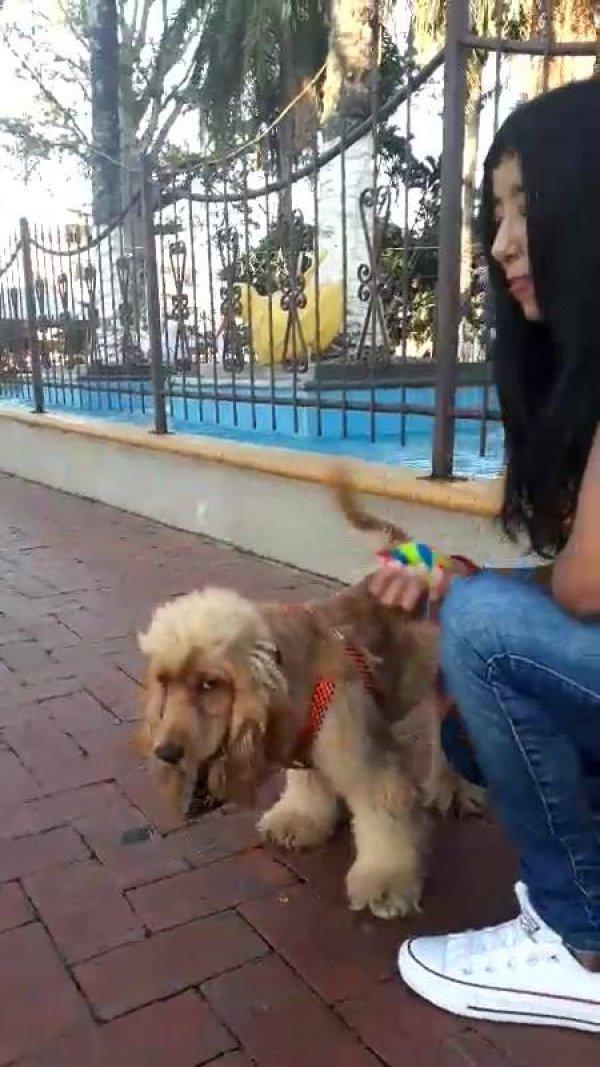 Cachorro brincando de pegar a bolinha com a mamãe, olha só que fofura!!!