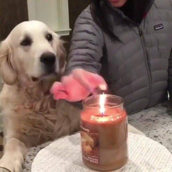 Cachorro com medo que a sua humana queime a mão, que lindo!