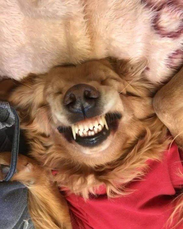 Cachorro com sorriso no rosto por estar ganhando muitos beijos, que fofura!