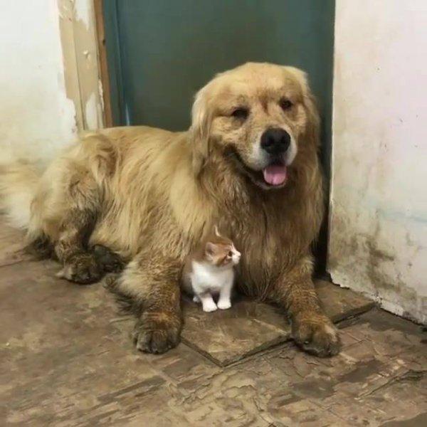Cachorro e gato como melhores amigos, ou não, espera um pouco...