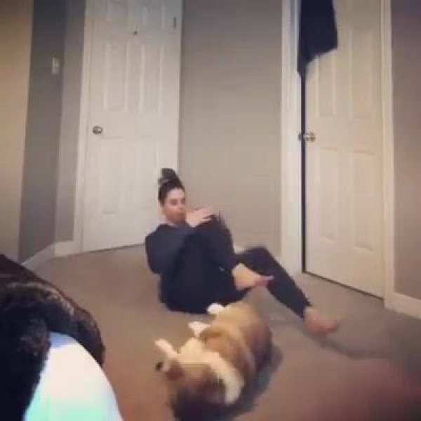 Cachorro fazendo exercício físico com sua dona, olha só que fofinho!!!
