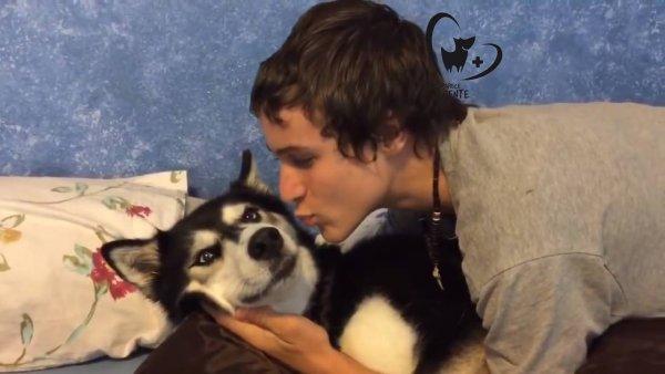 Cachorro ganhando beijo do seu dono, que drama é esse hein?