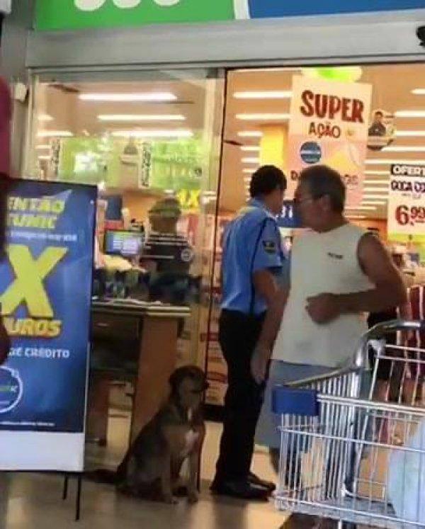 Cachorro ganhando carinho de funcionários e clientes de um mercado!